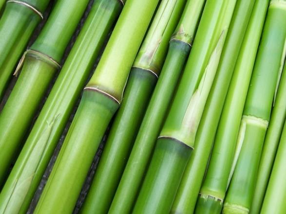 bamboo-240321_640